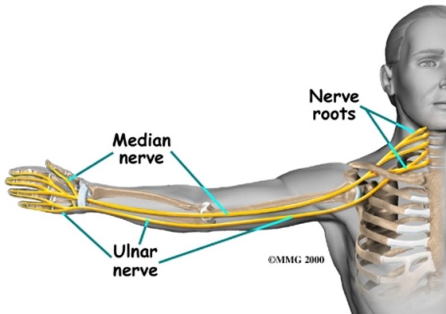 ulnar nerve - photo #4