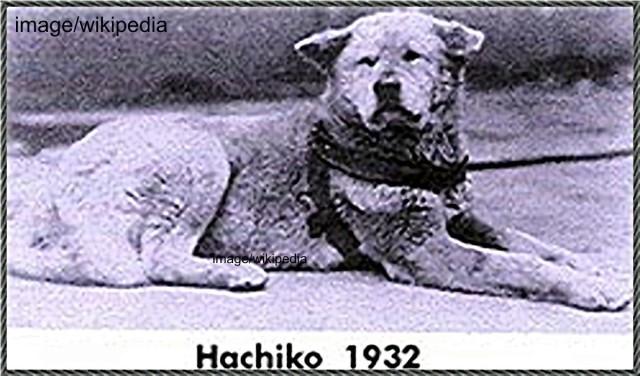 Hachiko 2