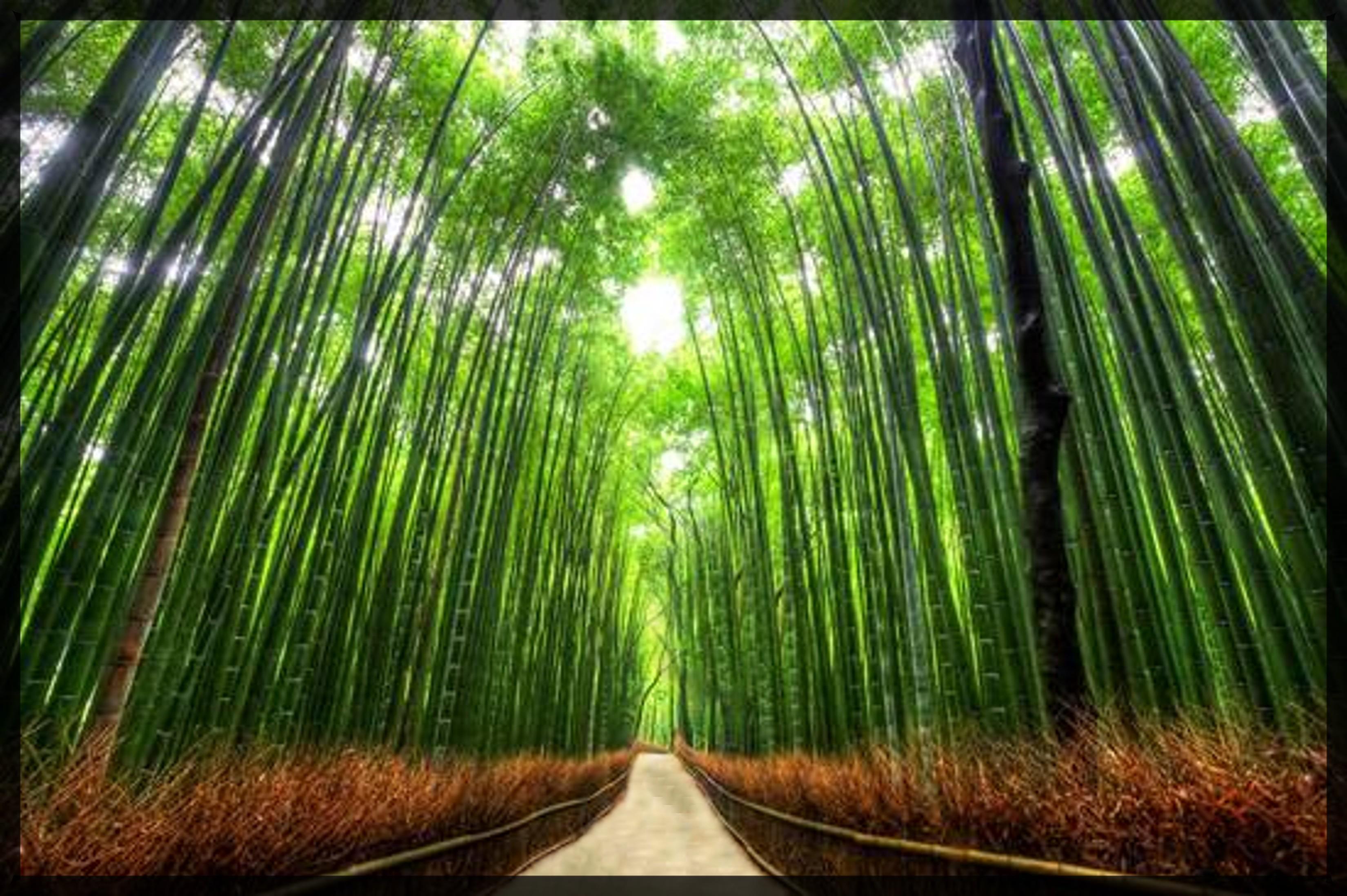 嵐山竹林 に対する画像結果