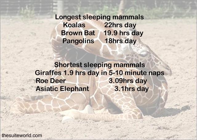 5Sleep Animal