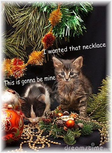 Cat Presents 1